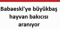 Mehmet Hasip