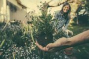Bahçıvan İş İlanı