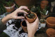 bahçıvan iş ilanları
